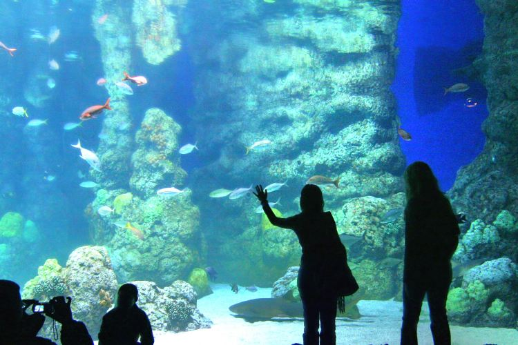 Discover the Depths of the Ocean in Denver
